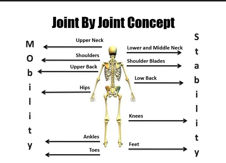 joint by joint